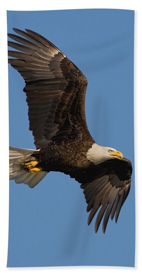 Eagle Bath Sheet featuring the photograph Eagle In Sunlight by William Jobes