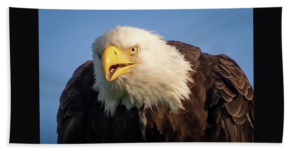 Eagle Hand Towel featuring the photograph Eagle Stare 2 by Allin Sorenson
