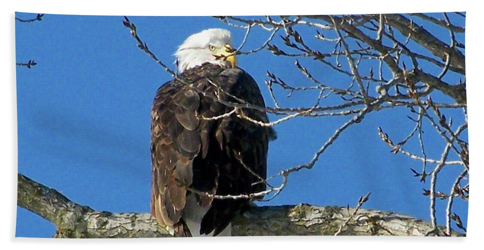 Color Photography Bath Sheet featuring the photograph Eagle Watch by Sue Stefanowicz