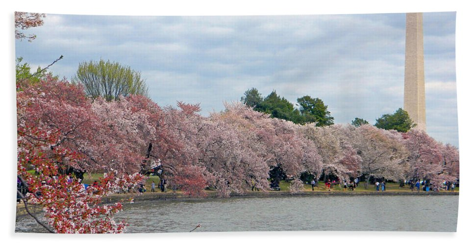 Early Arrival Of The Japanese Cherry Blossoms 2016 Hand Towel featuring the photograph Early Arrival Of The Japanese Cherry Blossoms 2016 by Emmy Vickers