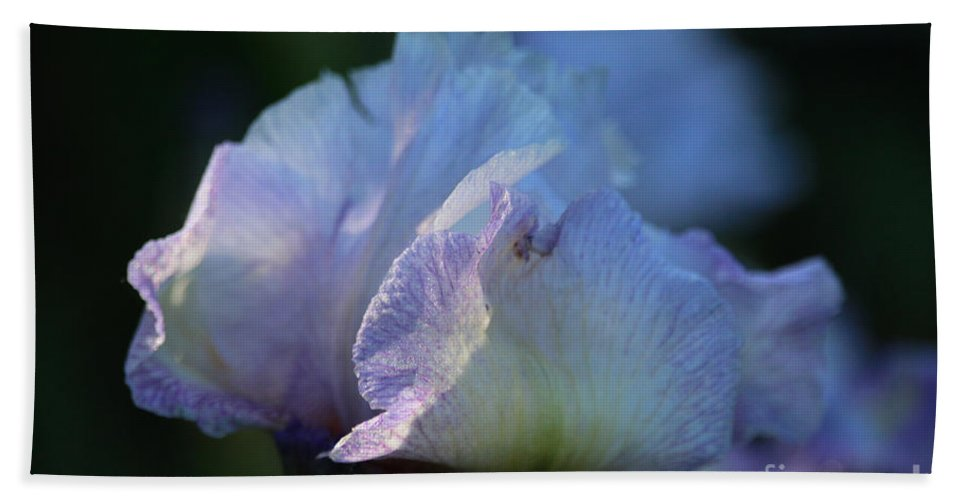 Flower Hand Towel featuring the photograph Early Iris Sunshine by Susan Herber