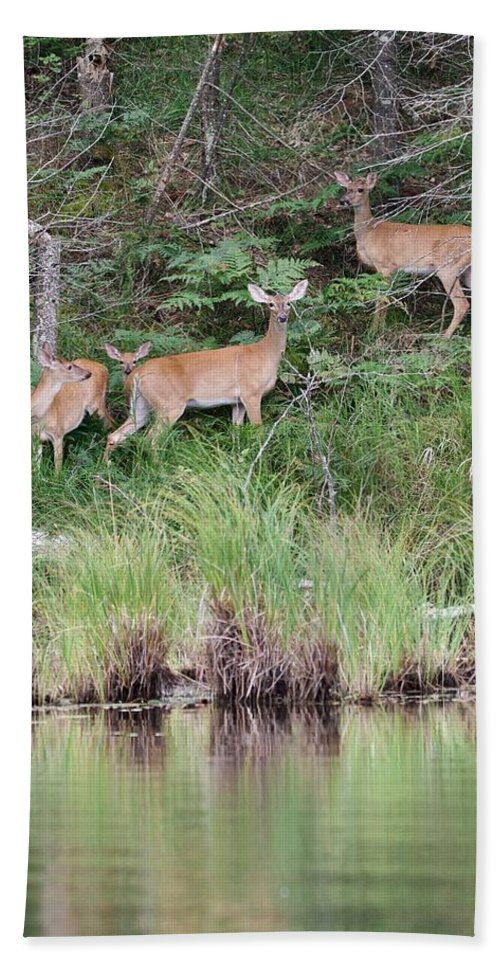 Whitetail Bath Towel featuring the photograph Early Morning At The Lake by Michael Peychich