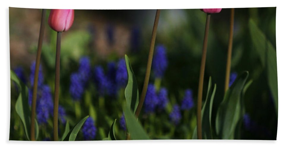 Flower Hand Towel featuring the photograph Early Morning Garden by Marilyn Hunt