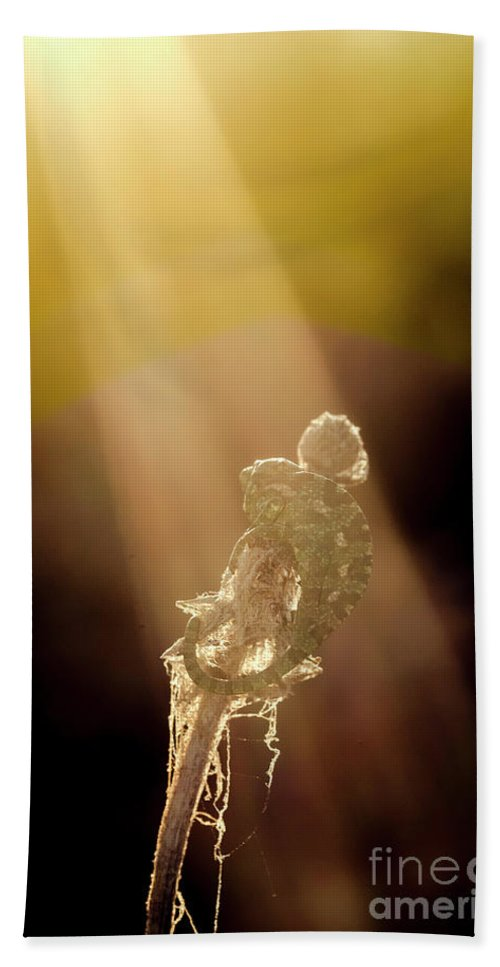 Animal Hand Towel featuring the photograph Early Morning Sun Bath by Arik Baltinester