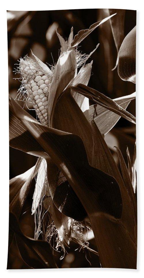 Farm Bath Towel featuring the photograph Ears To You Corn - Sepia by Angela Rath
