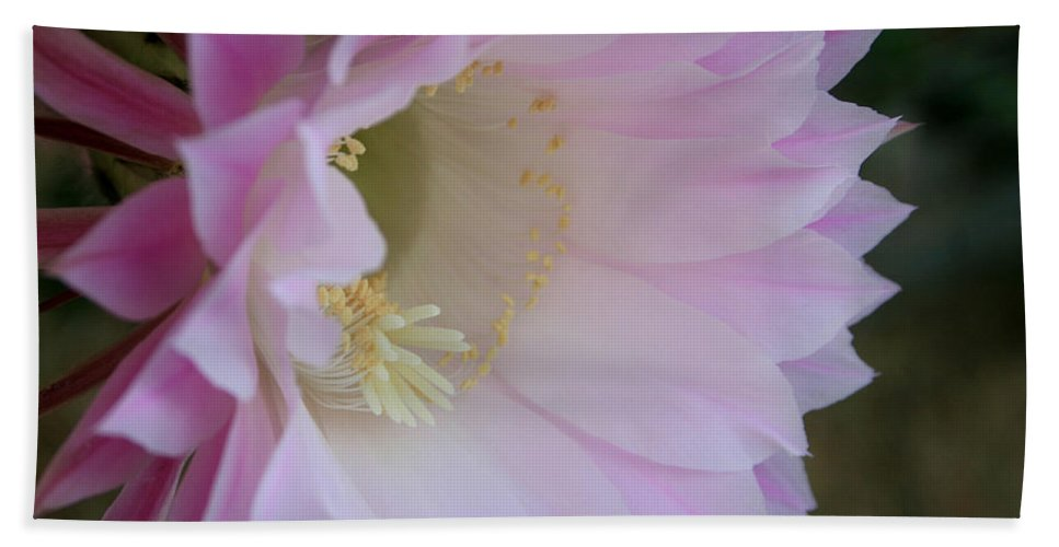 Cactus Easter Lily Bloom Bath Sheet featuring the painting Easter Lily Cactus East 2 by Marna Edwards Flavell