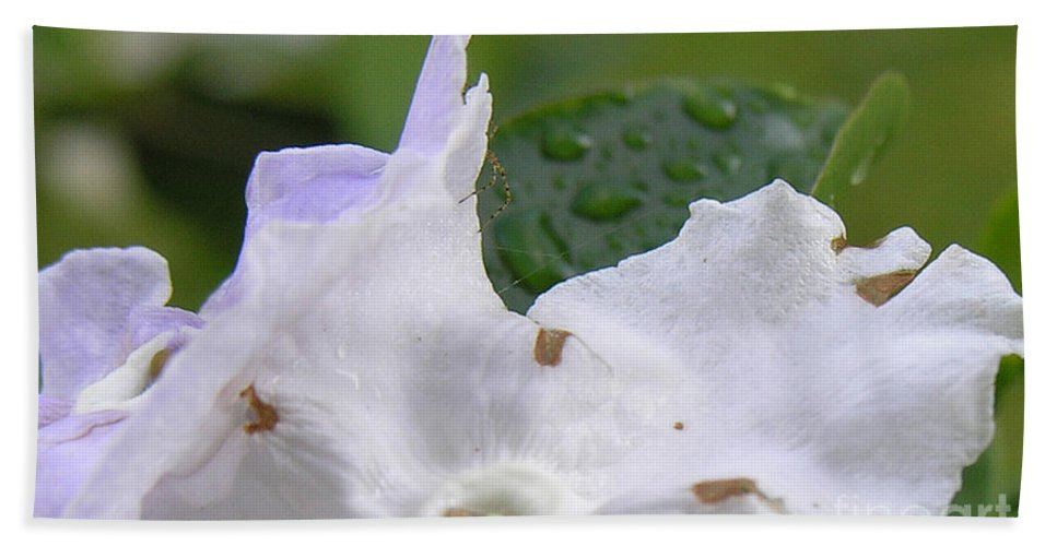 Flower Bath Towel featuring the photograph Easter Surprise by Richard Rizzo