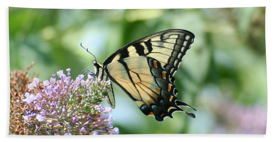 Eastern Hand Towel featuring the photograph Eastern Tiger Swallowtail 2 by Tammy Finnegan