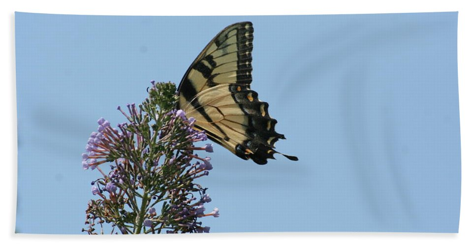 Eastern Hand Towel featuring the photograph Eastern Tiger Swallowtail by Tammy Finnegan