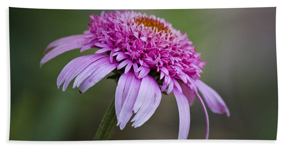 Pink Hand Towel featuring the photograph Echinacea Pink Double Delight by Teresa Mucha