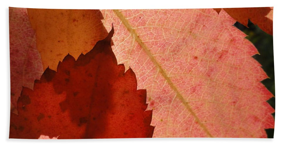Bath Sheet featuring the photograph Edgy Leaves by Trish Hale