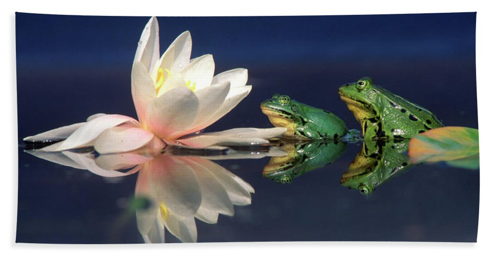 Nis Hand Towel featuring the photograph Edible Frog Rana Esculenta Two Frogs by Wim Weenink