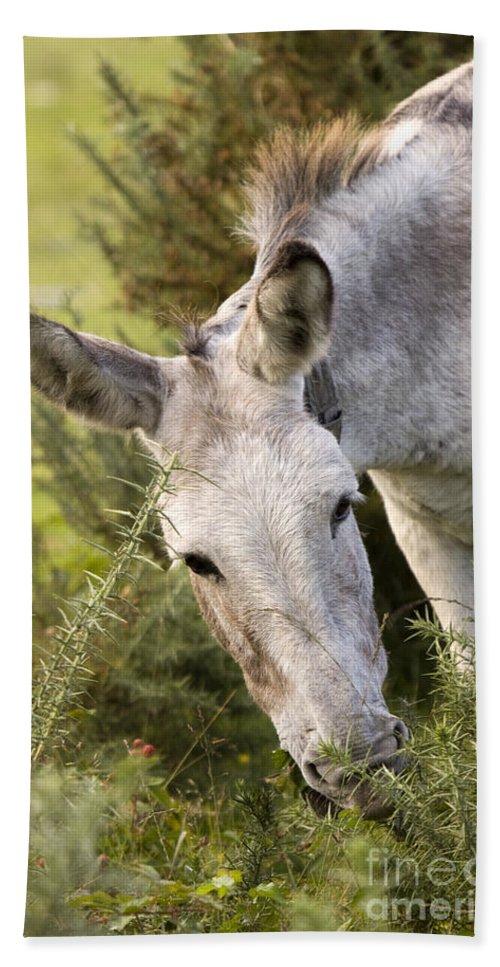 Donkey Bath Towel featuring the photograph Eeyore by Angel Tarantella