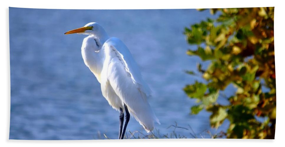 Spring Lake Bath Sheet featuring the photograph Egret by Bob Cuthbert