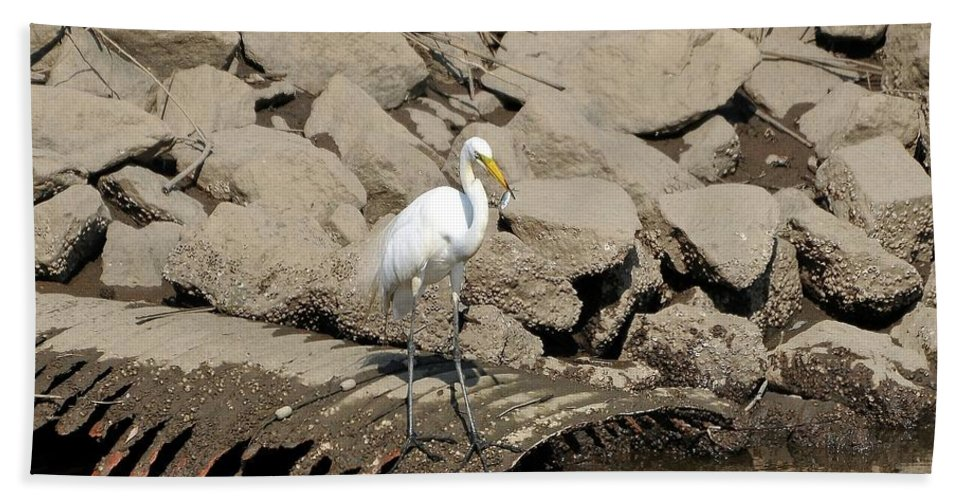 Great Egret Hand Towel featuring the photograph Egret Fishing by Al Powell Photography USA