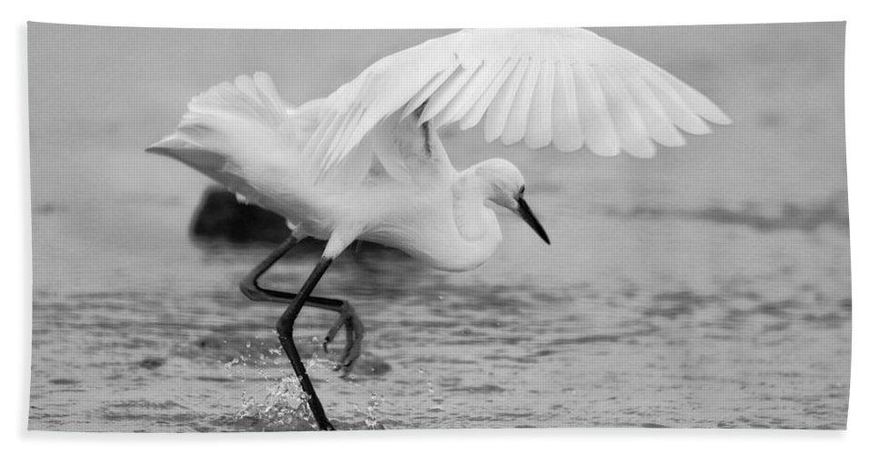 Hand Towel featuring the photograph Egret Hunting In Black And White by Angela Rath