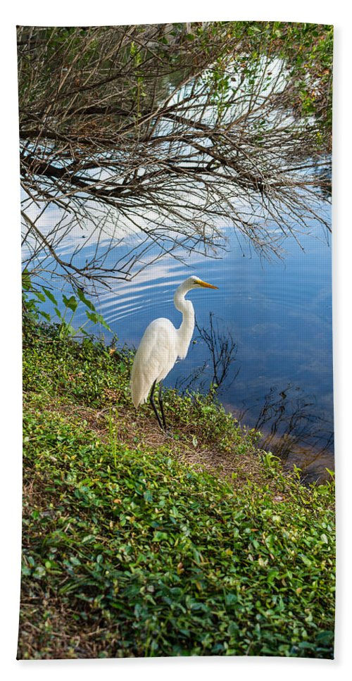 Egret Hand Towel featuring the photograph Egret In Florida Color by Shane Seymour