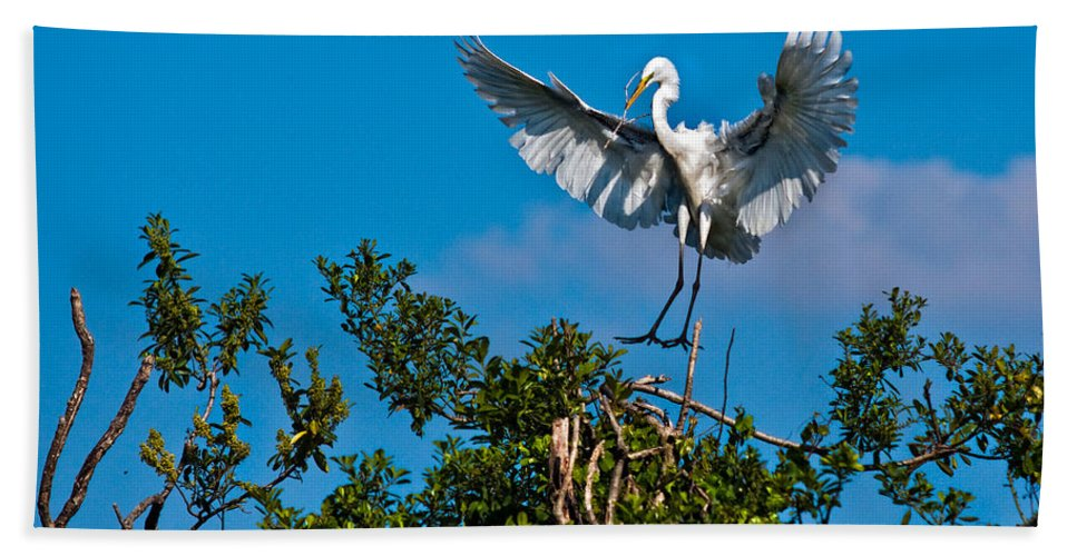 Avian Hand Towel featuring the photograph Egret Landing by Christopher Holmes