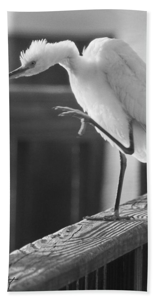 Birds Hand Towel featuring the photograph Egret Tai Chi by Phill Doherty