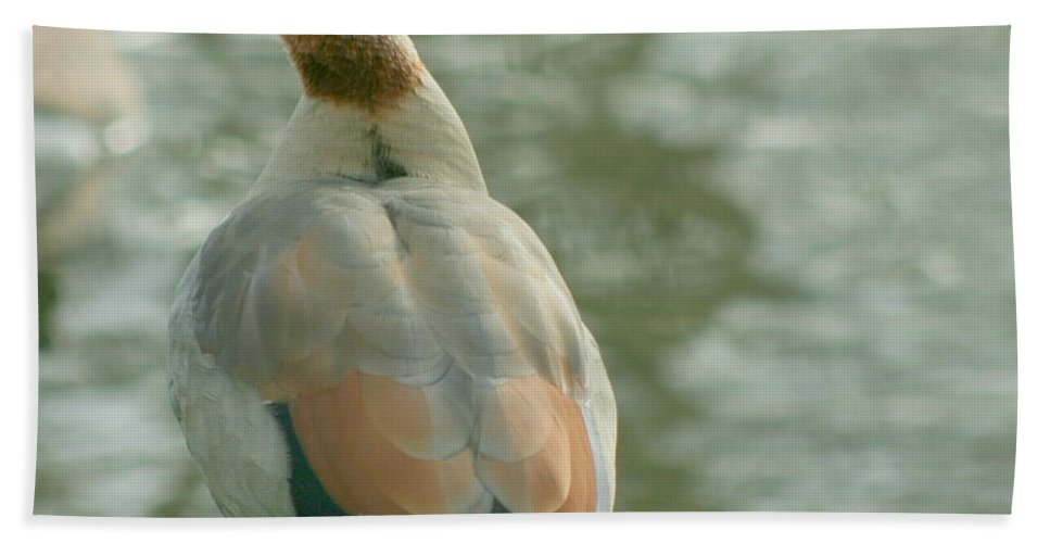 Egyptian Hand Towel featuring the photograph Egyptian Goose by Eric Wallis