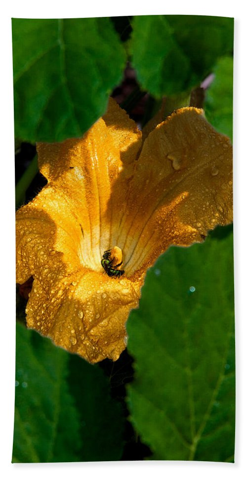 Squash Hand Towel featuring the photograph Eldorado For Bees by Christopher Holmes