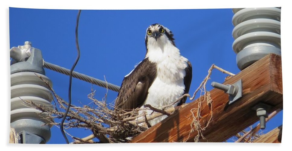 Osprey Hand Towel featuring the photograph Electric Blue Osprey by Christi Chapman