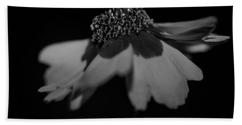 Floral Hand Towel featuring the photograph Elegance In Black And White by Mechala Matthews