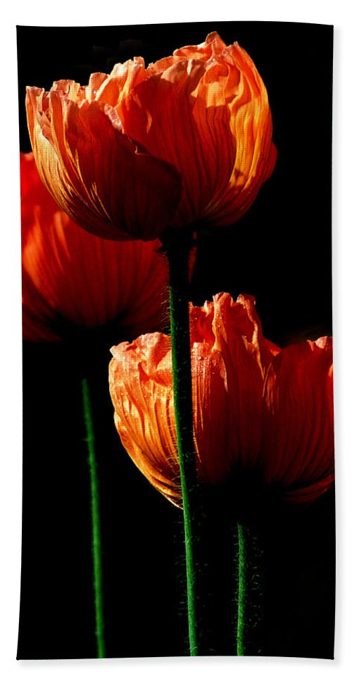 Photograph Bath Towel featuring the photograph Elegance by Stephie Butler