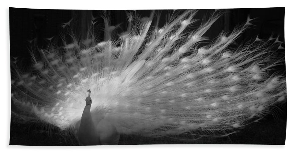 Albino Peacock Bath Sheet featuring the photograph Elegant In White by Margaret Bobb