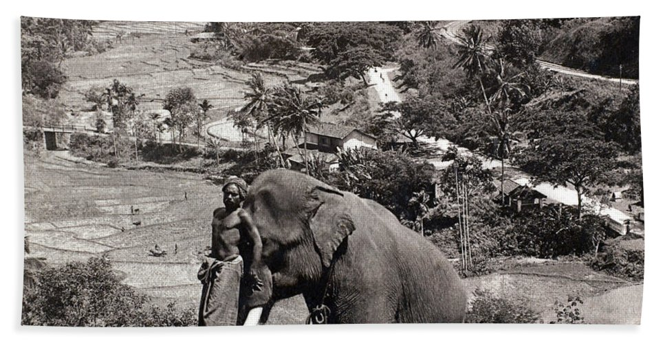 1902 Bath Sheet featuring the photograph Elephant And Keeper, 1902 by Granger