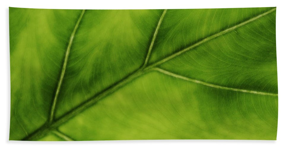 Leaf Hand Towel featuring the photograph Elephant Ear by Marilyn Hunt