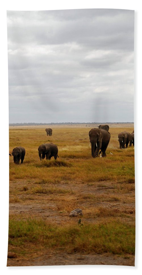 Elephants Hand Towel featuring the photograph Elephant Herd by Pamela Peters