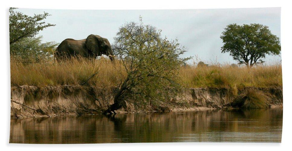 Karen Zuk Rosenblatt Art And Photography Bath Sheet featuring the photograph Elephant Sighting by Karen Zuk Rosenblatt