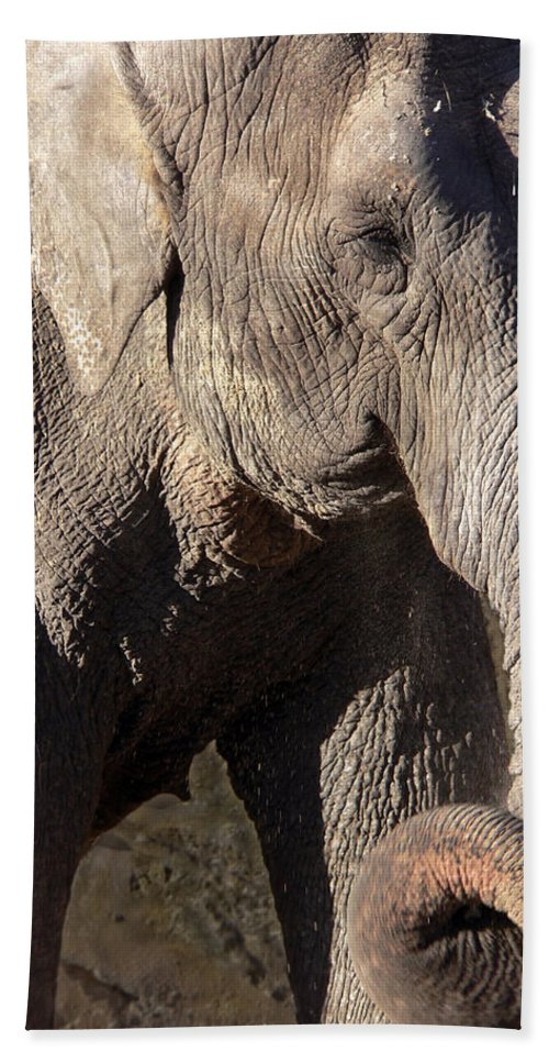 Elephant Hand Towel featuring the photograph Elephant by Steven Sparks