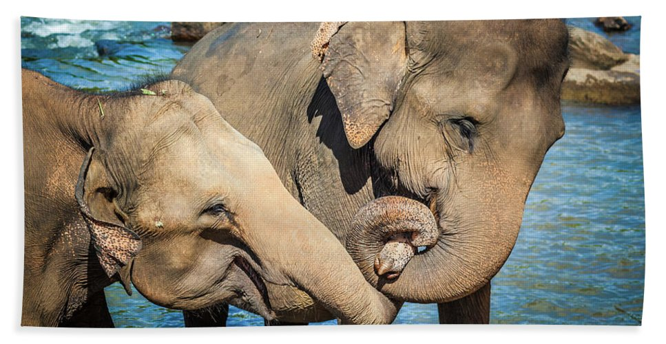 Elephant Bath Sheet featuring the photograph Elephants Bathing In A River by MotHaiBaPhoto Prints