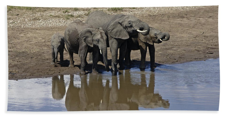 Africa Hand Towel featuring the photograph Elephants In The Mirror by Michele Burgess