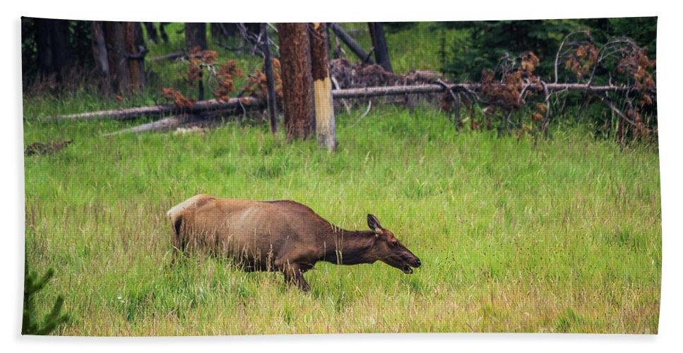 Nature Bath Sheet featuring the photograph Elk In The Field by Mirko Chianucci