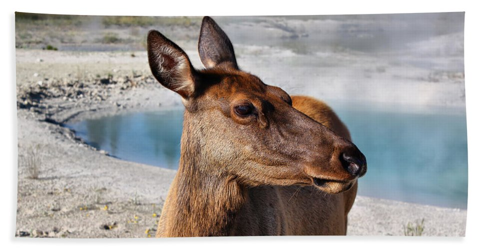Animal Bath Sheet featuring the photograph Elk In Yellowstone by Teresa Zieba