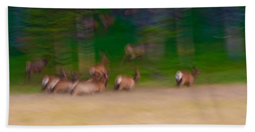 Yellowstone Bath Sheet featuring the photograph Elk On The Run by Sebastian Musial