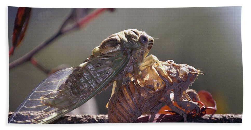Cicada Hand Towel featuring the photograph Emerging - Cicada 1 by D'Arcy Evans