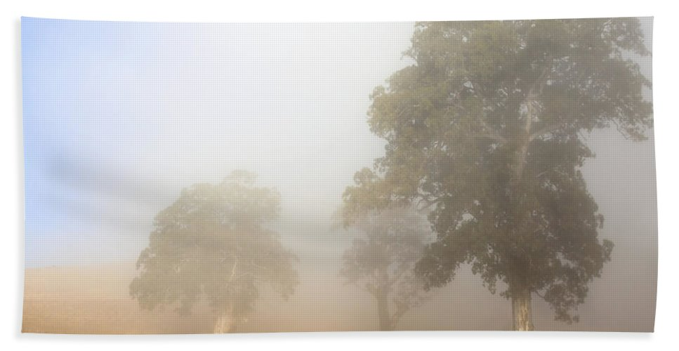 Gum Tree Hand Towel featuring the photograph Emerging From The Fog by Mike Dawson