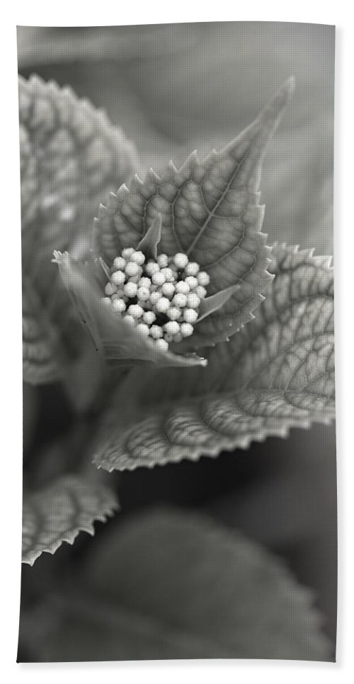 Flower Hand Towel featuring the photograph Emerging Hydrangea by Marilyn Hunt