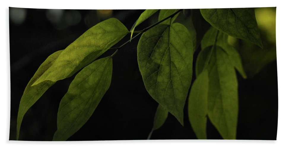 Spring Hand Towel featuring the photograph Emmergence by Laura Ragland