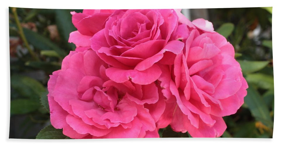 Pink Bath Sheet featuring the photograph Energizing Pink Roses by Carol Groenen