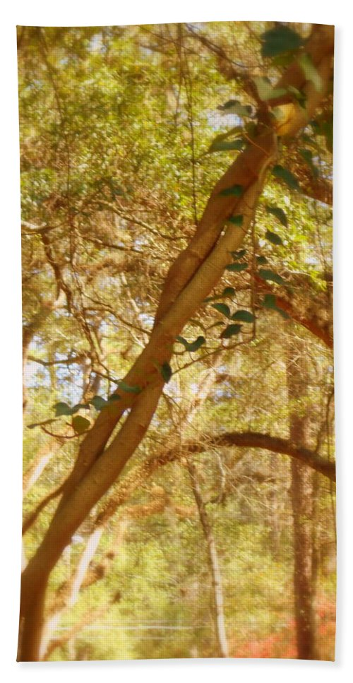 Branches Bath Sheet featuring the photograph Entwined by Paul Wilford