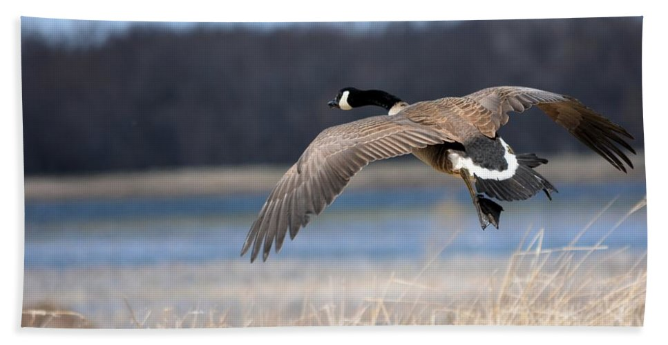 Goose Hand Towel featuring the photograph Escape by Bonfire Photography