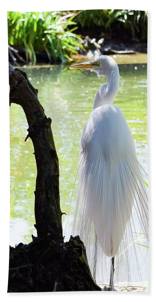 Egret Bath Sheet featuring the photograph Ethereal Snowy Egret by Gloria Moeller