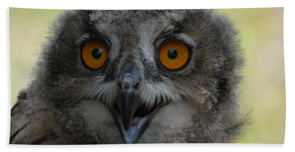 Eurasian Hand Towel featuring the photograph Eurasian Eagle Owl Chick by Erin O'Neal-Morie