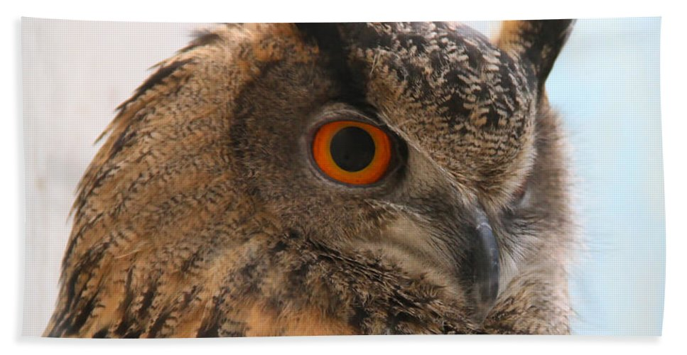 Eurasian Eagle-owl Hand Towel featuring the photograph Eurasian Eagle-owl by Ed Riche