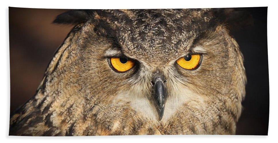 Eurasian Eagle Owl Bath Sheet featuring the photograph Eurasian Eagle Owl Portrait by Christopher Miles Carter